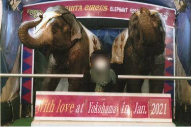 ゾウの足は震えていた…木下サーカス横浜公演レポート 2021年1月